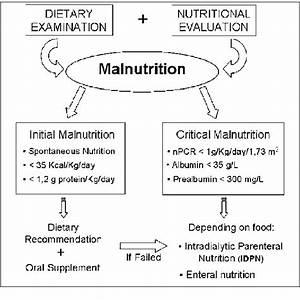 Schematic Of Malnutrition Treatment In Uremic Elderly