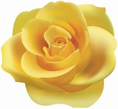 Yellow Rose Clip Clipart Roses Transparent Yopriceville