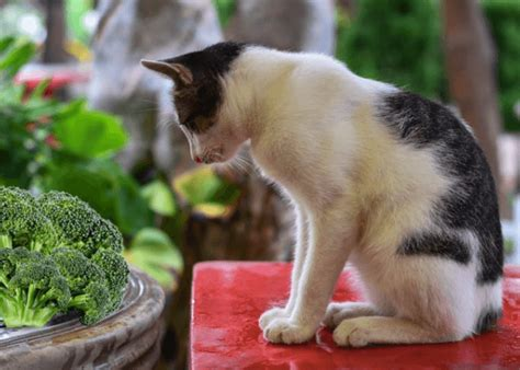 vegetables cats can eat