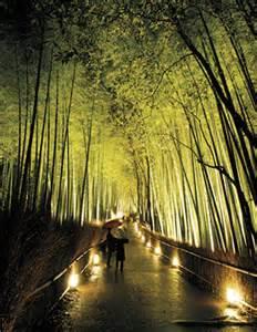 Bamboo Plants Landscape Design