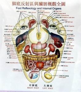 Feet Map Of Organs In Body