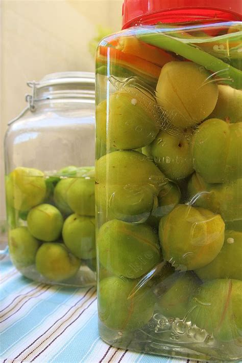 moroccan pickled green plums creative jewish mom