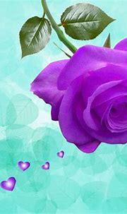 Awsome Lovely Purple Violet Rose Wallpaper ~ Artline ...