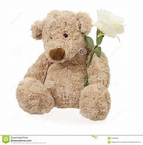 Teddy bear with white rose stock image. Image of sitting ...