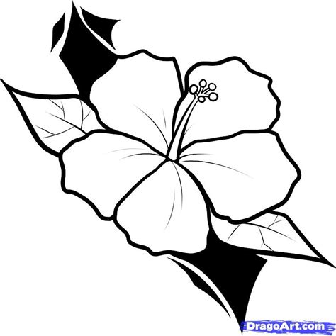 outline pictures of flowers for colouring simple flower outline az coloring pages