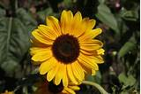 Yellow Flower Wallpapers, Awesome, Beautiful, Natural ...