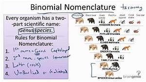 13.1.3 Binomial Nomenclature - YouTube