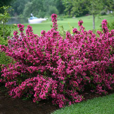 great garden plants great garden plants plant nursery for home gardeners