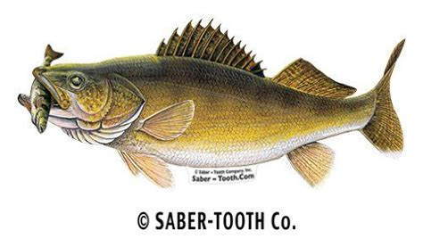 Wisconsin Boat Stickers by Walleye With Perch Fish Decal Sticker