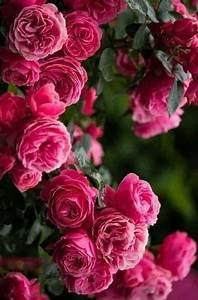 Langage Des Fleurs Pivoine : flower inspiration bevonboch spectacular flowers and heavenly gardens pinterest ~ Melissatoandfro.com Idées de Décoration