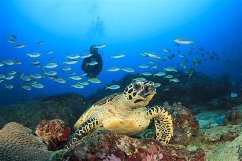 Best Dive Destinations by Top Dive Destinations When Not Everyone Dives Scuba
