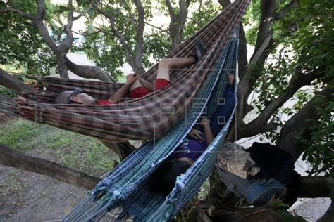 Boa Hammock by Even Trees Are Home For Venezuelans Fleeing To Brazil