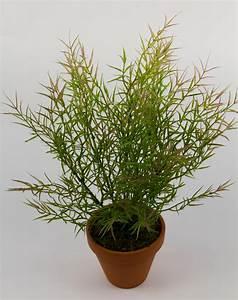 Orchideen Ohne Topf : asparagusbusch 40cm ohne topf dp kunstpflanzen k nstliche pflanzen asparagus ebay ~ Eleganceandgraceweddings.com Haus und Dekorationen
