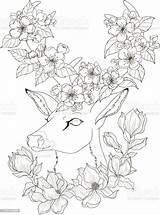 Coloring Adult Deer Drawing Apple Blossom Magnolia Animal Tree Russia sketch template