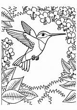 Hummingbird Coloring Pages Bird Printable Momjunction Books Humming Adult Birds Chinned Hummingbirds Flower sketch template