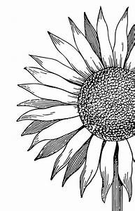 flower coloring page coloring sunflower in 2020