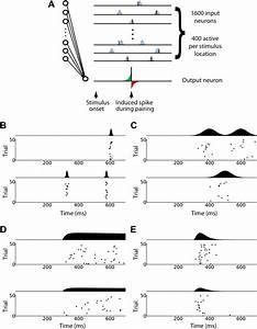 Changing The Responses Of Cortical Neurons From Sub