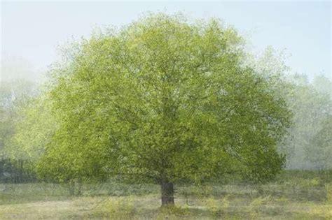 multi layered tree photography mapping  kim boske