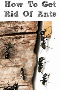 How to kill ants in your home 28 images how to get rid for How to get rid of ants in your bathroom
