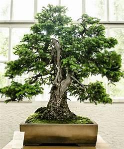 bonsaiausstellung im botanischen garten munchen nymphenburg 4 With whirlpool garten mit bonsai 200 jahre