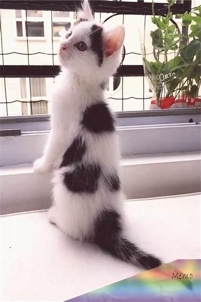 Fluffy Kittens Cats Puppies Kitten Cat Eyes