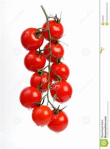 Tomatoes On The Vine Stock Photography - Image: 2583522