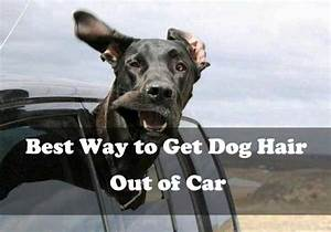best way to dog hair out of car