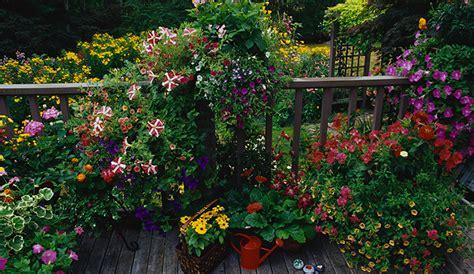 piante da terrazzo perenni mobili lavelli piante da terrazzo