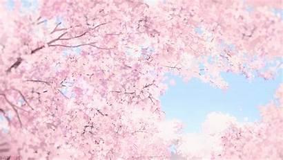 Sakura Cherry Anime Gifs Blossom Breath Tamako