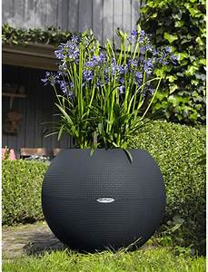 Pot Pour Plante : fleurs en pot pour exterieur photos de magnolisafleur ~ Teatrodelosmanantiales.com Idées de Décoration