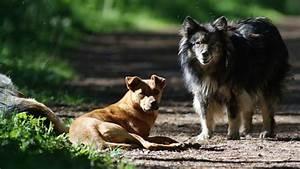 Conoscere il randagismo, la comunicazione e la vita dei cani liberi