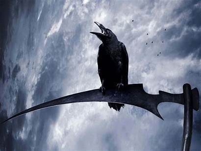 Raven Psychopomp Wallpapers Backgrounds Cool Wallpapergeeks