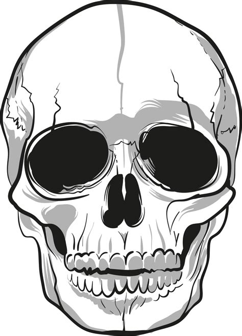 skulls png image purepng  transparent cc png
