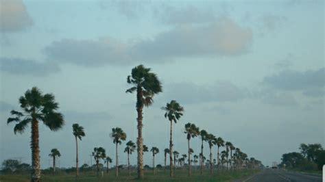 petition eddie lucio jr stop  removal  rgv palm