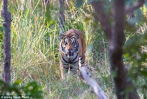 Dutch tourist Gerard Van Laar survives Nepal tiger attack ...