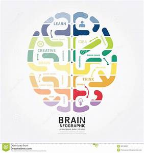 Infographics Vector Brain Design Diagram Line Style