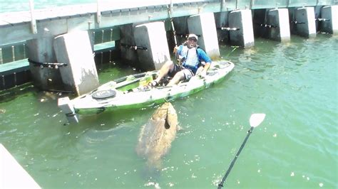fish grouper kayak goliath fishing rod cape coral largest catch ever catches florida giant bottom caught chew reel shark lands