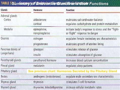 13 endocrine system ppt