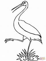 Stork Coloring Pages Printable Storks Wood Leg Baby Version Clipart Designlooter Getcoloringpages Tablets Compatible Ipad Android Library Supercoloring Boy Categories sketch template