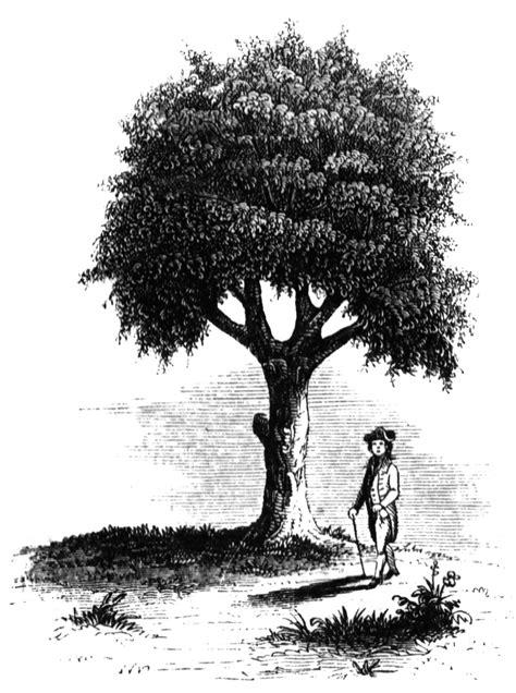 liberty tree clipart