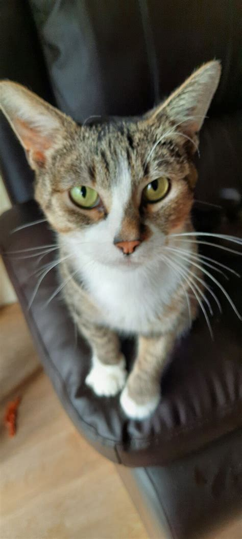 PP.lv Dzīvnieki Kaķi, kaķēni: Meklē mājas Dažus mēnešus ...