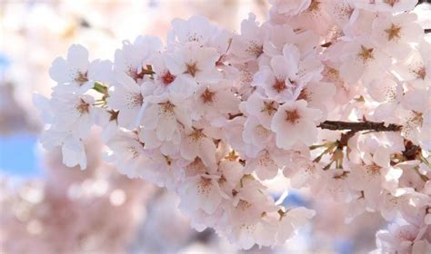 force branches  flowering trees shrubs