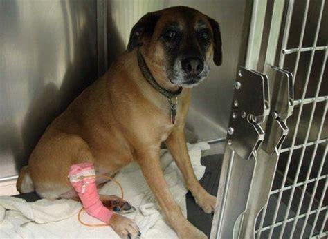 kidney problems kidney failure  dogs