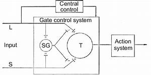 Schematic Diagram Of Gate Control Theory Of Pain