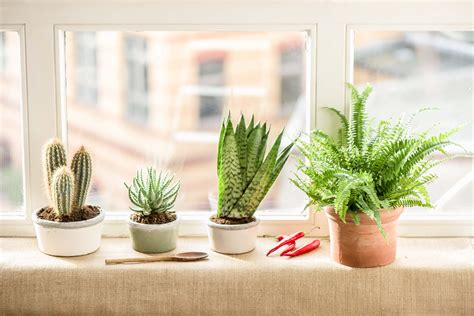 House Plants For Kitchen Window by Best Kitchen Plants Plants For Kitchen To Decorate It