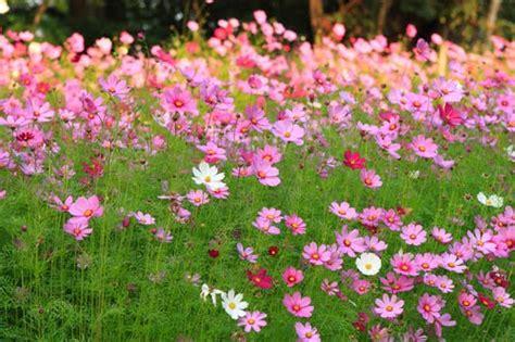 Gloya55: ภาพดอกไม้