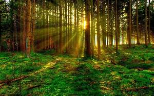 3d Green Forest