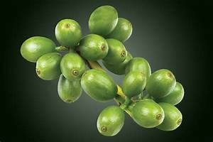 Green Coffee Bean Extract Studies And Scientific Tests Results