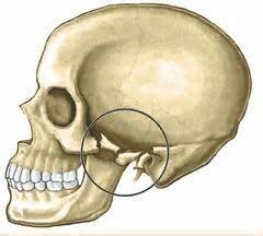 » Blog ArchiveZygomatic Arch Fractures and Their Repair
