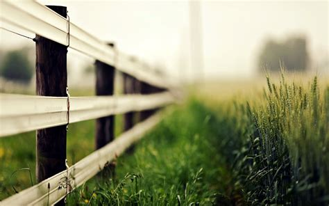 nature close  fence fencing green grass ears spikes blur